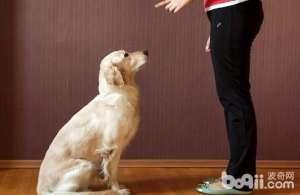 怎么教狗狗坐下的本领?-狗狗技巧训练